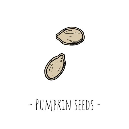 Pumpkin seeds. Isolated objects on a white background. Hand-drawn style. Vector cartoon illustrations. Vettoriali