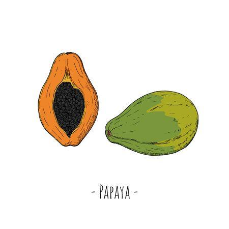 Whole papaya and papaya half. Vector cartoon illustration. Isolated objects on white. Hand-drawn style.