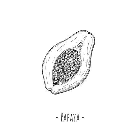 Papaya half. Vector cartoon illustration. Isolated object on a white background. Hand-drawn style.