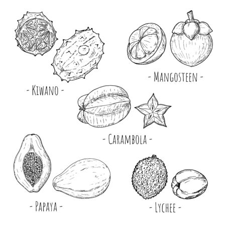 Set of tropical fruits. Vector cartoon illustrations. Isolated objects on white. Hand-drawn style.