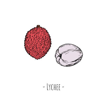 Lychees Vector cartoon illustration. Isolated objects on white. Hand-drawn style. Illustration