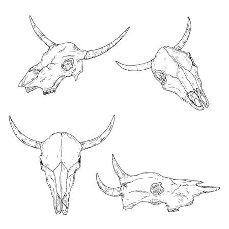 Bull skulls. Isolated on white. Vector illustrations. Hand-drawn style.