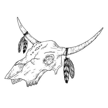 Bull skull with feathers on horns. Boho style. Vector illustration. Isolated on white. Hand-drawn style.