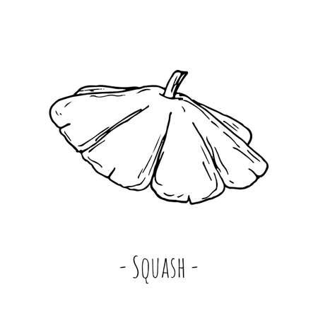 Squash. Vector illustration. Isolated on white. Hand-drawn style. Ilustracja