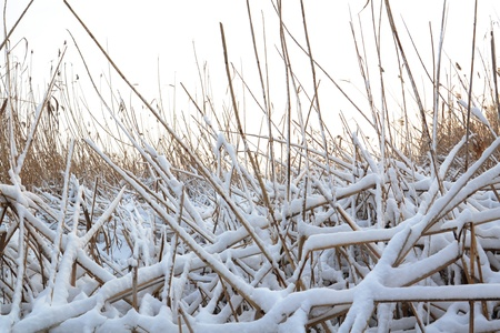 Winter landscape, frozen river bank photo