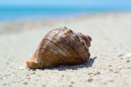 sea shells with sand as background photo