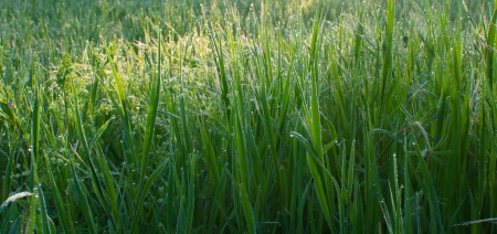Early morning dew drops on green grass photo