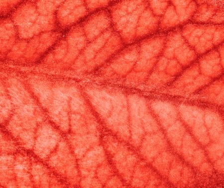 vasos sanguineos: vasos sangu�neos del cerebro Foto de archivo