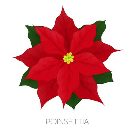 Poinsettia flower isolated on white. Icon for Christmas or New Year greeting card design. Vector cartoon poinsettia with star flower and leaf for winter holiday decoration. Vector illustration.