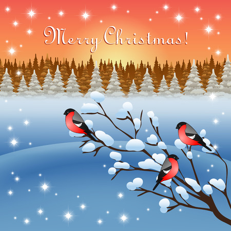 greeting card backgrounds: An editable vector illustration of bullfinches on a branch in a winter forest