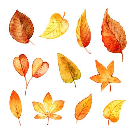 Set autumn leaves watercolor. Vector