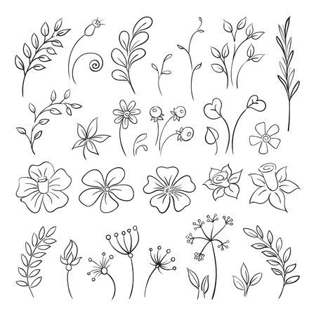 Doodle elements of Flowers, buds, leaves.