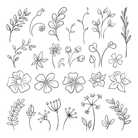 Doodle elementen van bloemen, knoppen, bladeren.