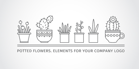 potted plant cactus: linear design, potted flowers.