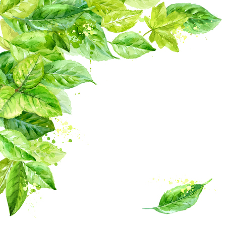 Illustration of spring leaves. watercolor angular composition. Vettoriali