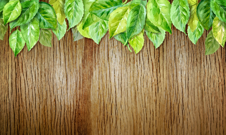 Spring leaves on wood horizontal background. Watercolor illustration. vector