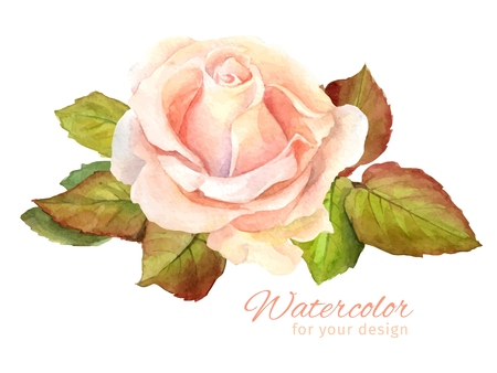 vintage rose: Vector Rose watercolor. Vector illustration for greeting cards, invitations, and other printing and web projects.