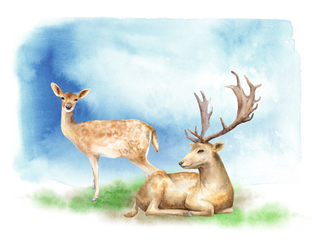 Male and female deer are sitting on the edge. Forest landscape. Watercolor illustration