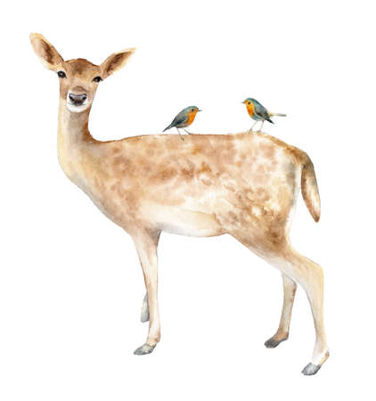 Deer with birds Robin. Watercolor illustration. Isolated background Banque d'images