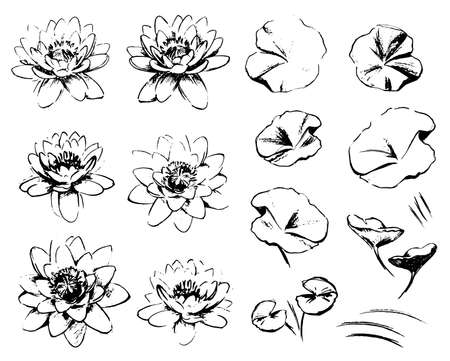 Sketch Water lilies isolated on white background. The lotuses and leaves. Artistic isolated design elements