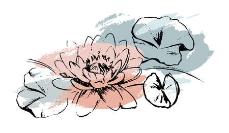 Sketch Water lilies with abstract brush strokes. Isolated on white background. The lotuses and leaves. Artistic isolated design elements. Ilustracja
