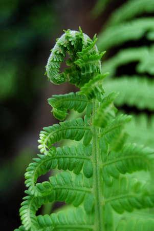 furl: close-up furl fern