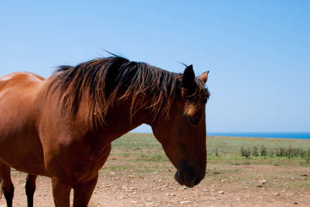chestnut horse grazing in a meadow photo