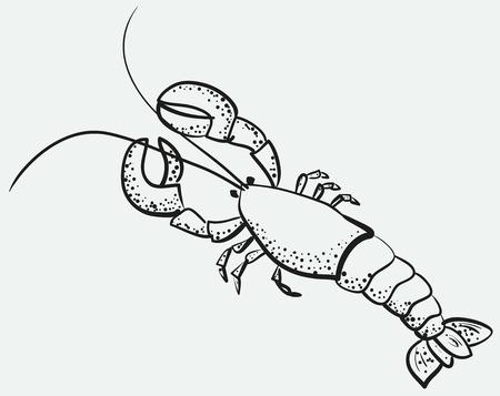 sketch of big appetizing lobster Illustration