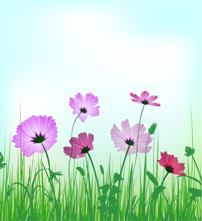 cosmos flowers: Flowers background with copyspace