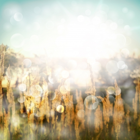 Sunny summer background with defocused lights