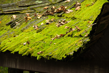 mossy: Mossy roof