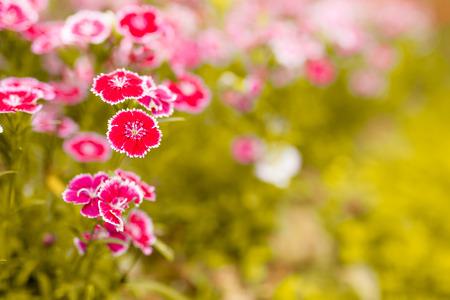 꽃을 피 스톡 콘텐츠