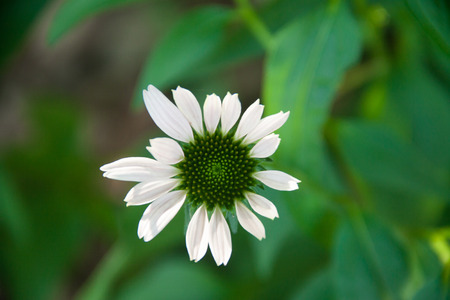 Close up of a flower with white petals