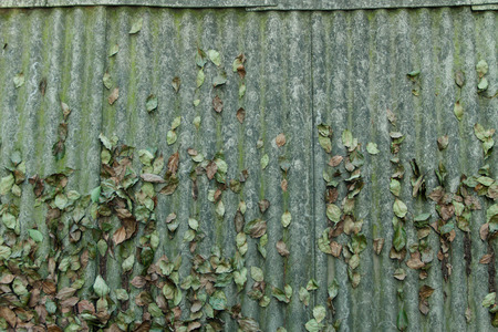 Leaves on the roof Stock Photo
