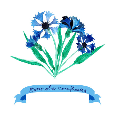 cornflowers: Card with beautiful watercolor cornflowers. Illustration