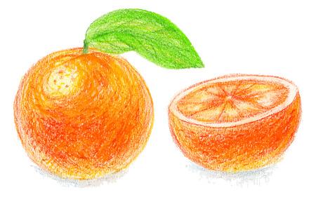 exotic fruit: Color pencils orange. Citrus. Fresh exotic fruit. Color pencils illustration. Clean eating food.