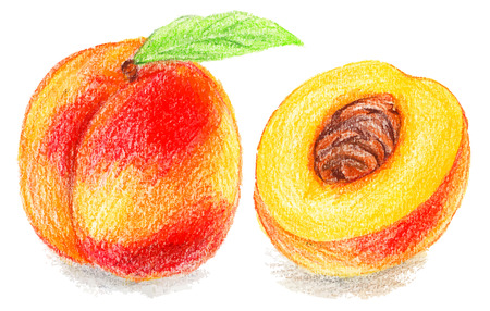 peach: Color pencils illustration - sweet peach. sliced fruit with seeds.
