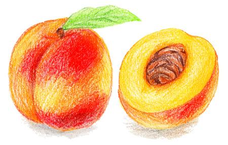 sliced fruit: Color pencils illustration - sweet peach. sliced fruit with seeds.