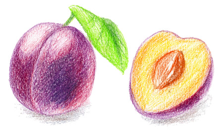 sliced fruit: Color pencils illustration - sweet peach. sliced fruit with seeds.