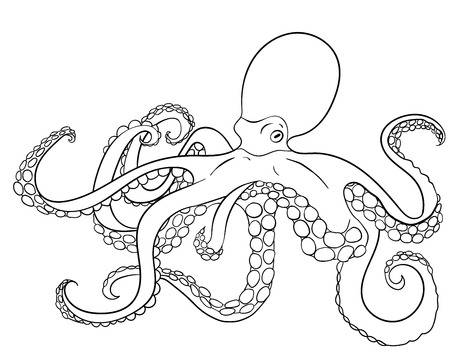 mollusc: Coloring page with octopus. Black white hand drawn doodle oceanic animal for coloring. Sketch with mollusc for tattoo, poster, print, t-shirt in style. Vector. Illustration