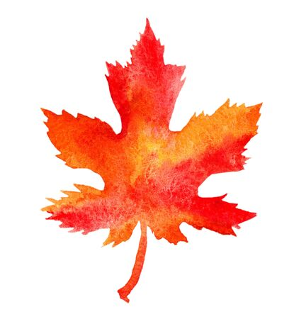 Bright watercolor maple leaf isolated on white background. Traditional illustration with autumn theme painted by aquarelle