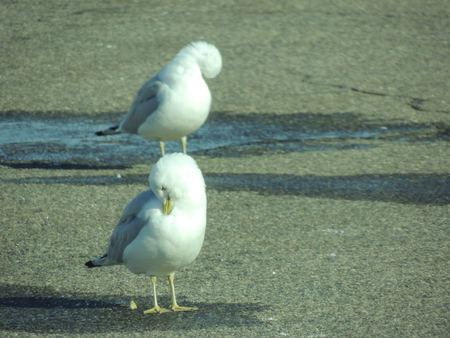 Seagulls with heads bowed Stok Fotoğraf
