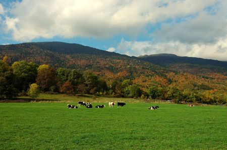 Autumn Mountain Pasture