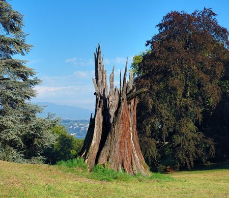 Stump from Sequoia struck by lightning in a park in Geneva, Switzerland