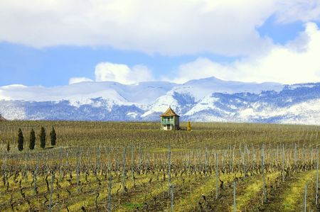 Winter vineyard in Switzerland with snow covered Jura mountains in the background.