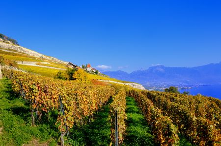 Autumn View of Lavaux Vineyards by Lake Geneva in Switzerland