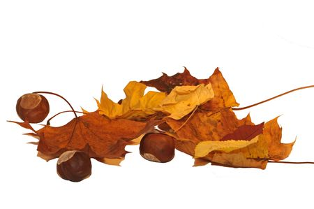 Arrangement of Autumn leaves and nuts isolated on white. Stock Photo