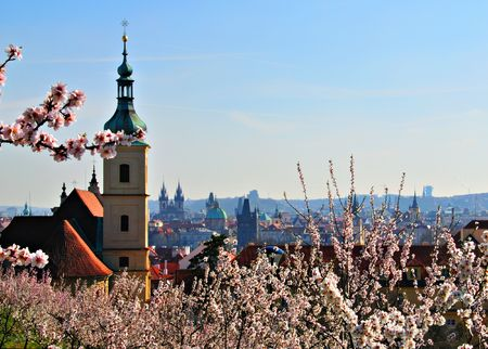 Prague from a hillside orchard through the spring cherry blossoms. Stock Photo - 4494851