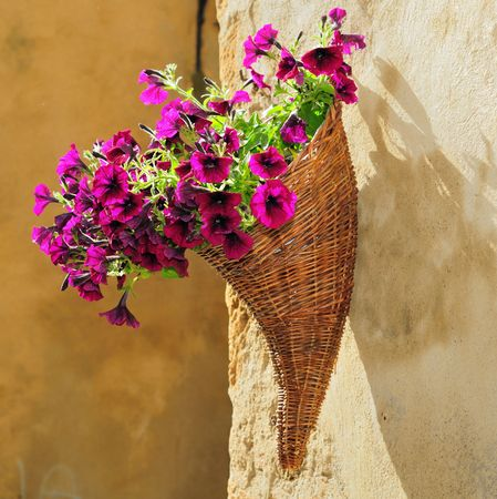 Bouquet of purple petunias in a horn shaped basket on a wall in Pienza, Italy