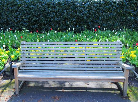 Park bench in front of flower bed with tulips.